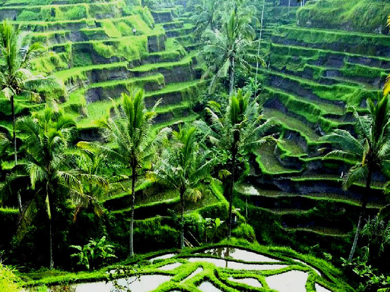 Highlights of Bali in addition to Java   Patrick Syder Travel  Bali Tourist Destinations: 26 BALI WALLPAPER