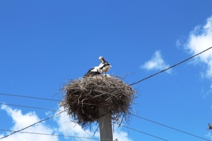 Stork nests dome telegraph poles
